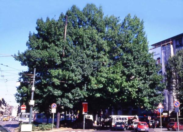 Perchè dovremmo piantare più alberi nelle aree urbane