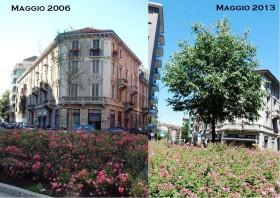 Milano Fidia – La storia di un albero