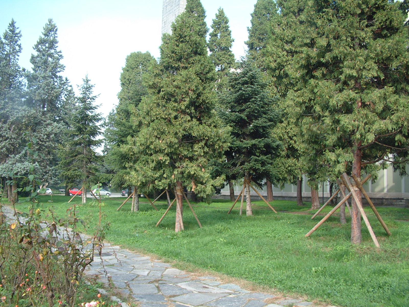 Nuovi impianti di conifere a pronto effetto sul territorio del comune di San Donato Milanese.