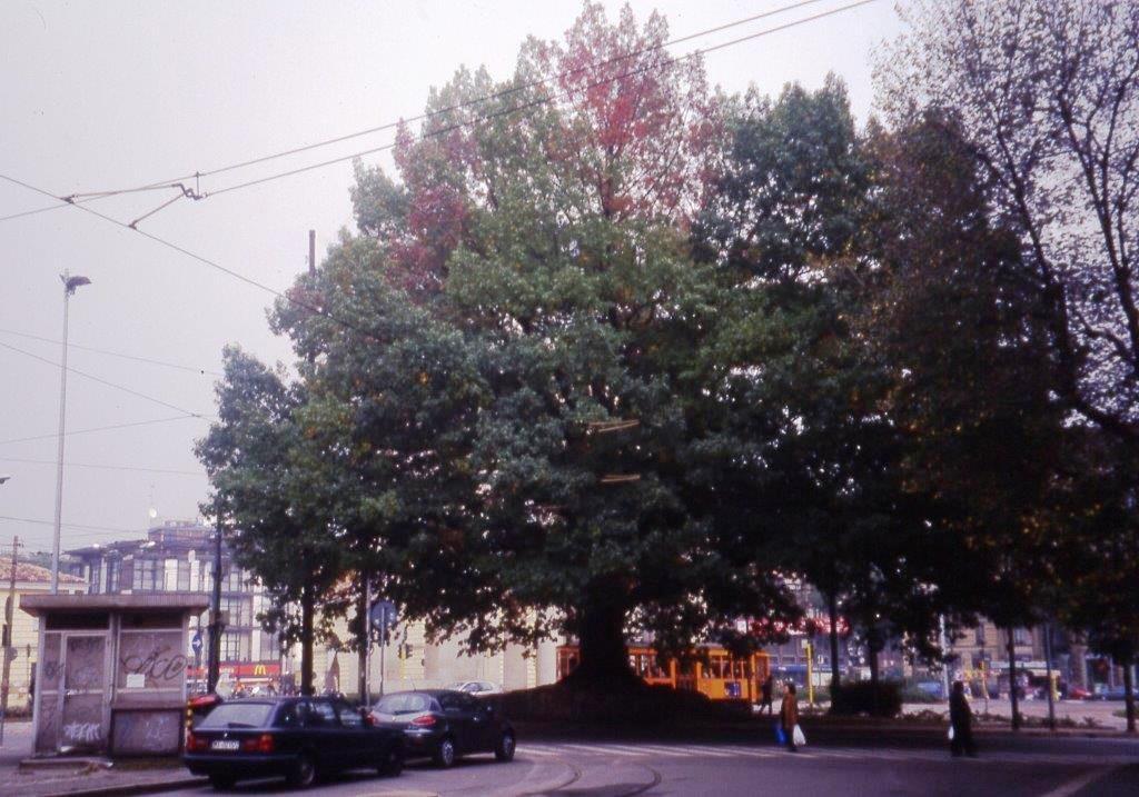 XXIV Maggio - Quercus rubra - Autunno