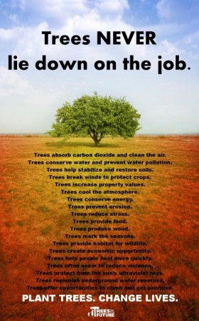 Trees never lie down on the job