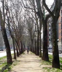 Bosco a Milano