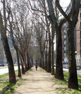 Forest in Milan