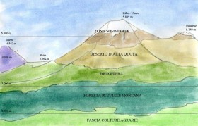 Gli ecosistemi del Kilimanjaro