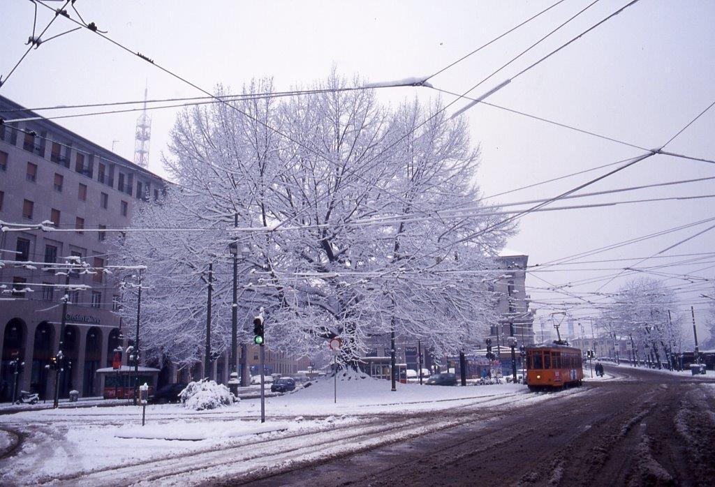 2000_12_29 - XXIV Maggio - Quercus rubra