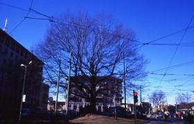 """21 novembre è la """"Giornata nazionale degli alberi"""""""