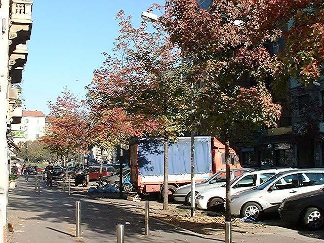 Via Borsieri - 2001-11-27 -Liquidambar