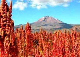"""Quinoa – il """"cereale"""" delle Ande"""