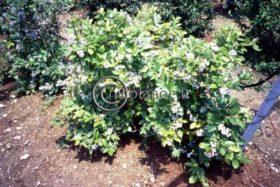 I piccoli frutti: la coltivazione dei frutti di bosco