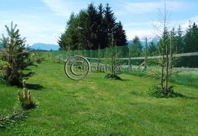 Nuovi impianti di Larix decidua Mill. e Pinus silvestris L. sul percorso della buca 15