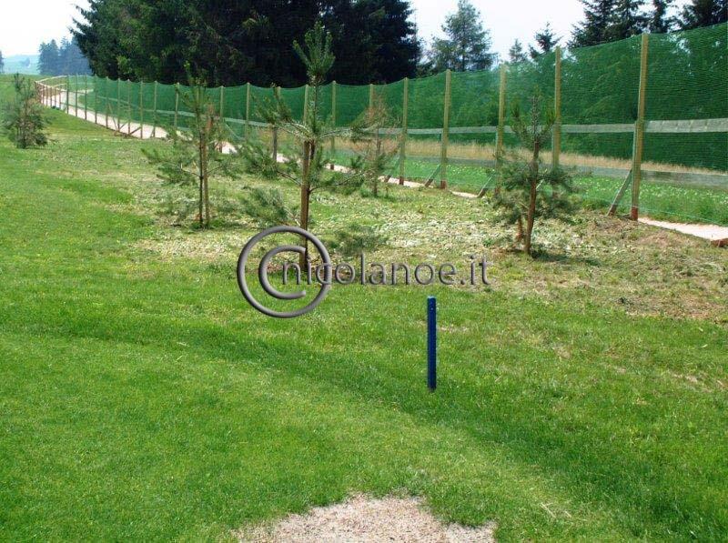 Nuovi impianti di Pinus silvestris L. sul percorso della buca 15