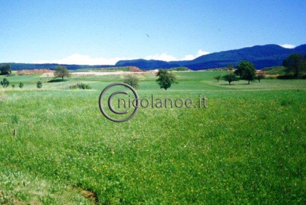 Salvaguardia dell'ambiente in alta Val di Non: campo di golf o meleto in impianto specializzato?