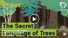 The Secret Language of Trees