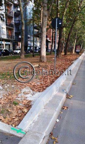 I platani di Viale Zara protetti dai nuovi cordoli