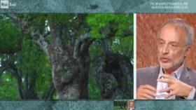 Stefano Mancuso a Kilimangiaro: I benefici delle piante in ambiente urbano